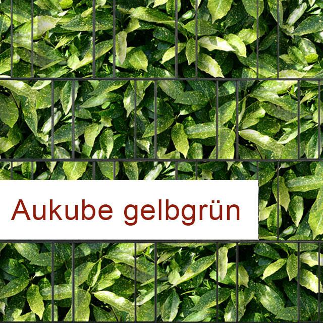 Sichtschutzstreifen Motiv Aukube